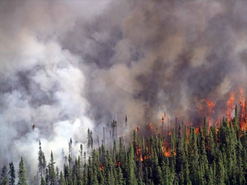 crowning-fire-in-spruce-forest